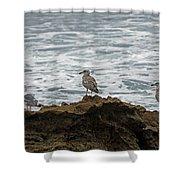 Gulls Podium  Shower Curtain