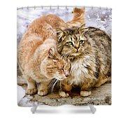 Gutter Kitties Five Shower Curtain