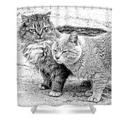 Gutter Kitties Four Shower Curtain