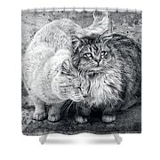 Gutter Kitties Nine Shower Curtain
