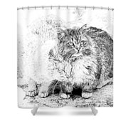 Gutter Kitties Seven Shower Curtain