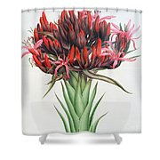 Gymea Lily Shower Curtain
