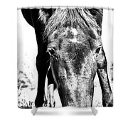 Gypsy Upclose Shower Curtain