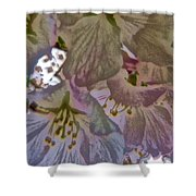 H Cherry Blossom Cont L Shower Curtain