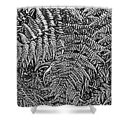 H Ferns Cont Z Shower Curtain