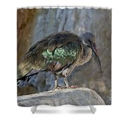 Hadada Ibis Shower Curtain