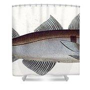 Haddock Shower Curtain