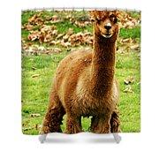 Hairy Brown Gumby Aka Brown Alpaca Shower Curtain