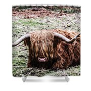 Hairy Cow Shower Curtain