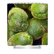 Hairy Peary Chayote Squash By Diana Sainz Shower Curtain