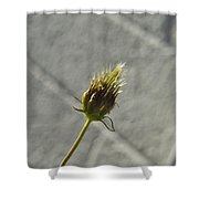 Hairy Plant Seed Pod 1 Shower Curtain
