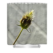 Hairy Plant Seed Pod 3 Shower Curtain