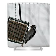Hairy Woodpecker Shower Curtain