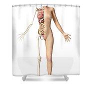 Half Cutaway View Showing Skeleton Shower Curtain by Leonello Calvetti