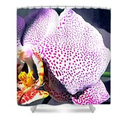 Half Orchid Shower Curtain
