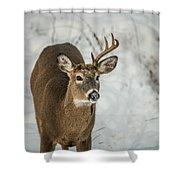Half Rack Shower Curtain by Paul Freidlund