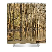 Hall Of Cypress Shower Curtain