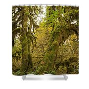 Hall Of Mosses 3 Shower Curtain