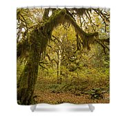 Hall Of Mosses 5 Shower Curtain
