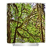 Hall Of Mosses In Hoh Rain Forest In Olympic National Park-washington Shower Curtain