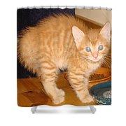 Halloween Kitty Shower Curtain