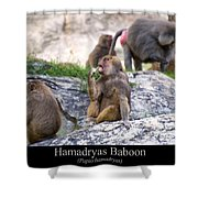 Hamadryas Baboon Shower Curtain