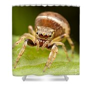 Hammerjawed Jumper I Shower Curtain by Clarence Holmes