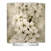 Hanami Shower Curtain