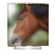 Handsome Bay Shire Horse Shower Curtain