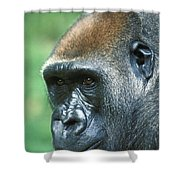 Handsome Shower Curtain
