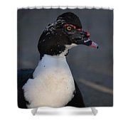 Handsome Muscovy Shower Curtain
