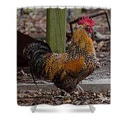 Handsome Rooster Shower Curtain