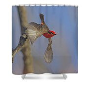 Handsome Vermillion Off The Limb Shower Curtain