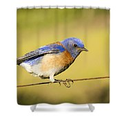 Hang On Shower Curtain