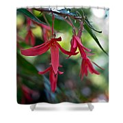 Hanging Asian Lillies Shower Curtain