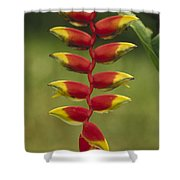 Hanging Heliconia Blooming In Rainforest Shower Curtain