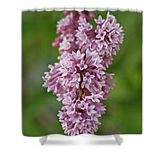 Hanging Lilac Shower Curtain