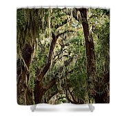 Hanging Moss And Giant Oaks Shower Curtain