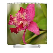Hanging Orchid Shower Curtain