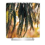 Hanging Pine Shower Curtain