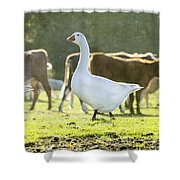 Hanging With The Herd Shower Curtain