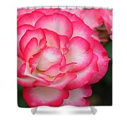 Hannah Gordon Floribunda Rose Shower Curtain