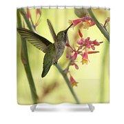 Happy As A Hummingbird  Shower Curtain