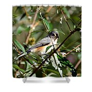 Happy As A Titmouse Shower Curtain