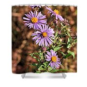 Happy Asters Shower Curtain