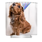 Happy Birthday Dog Shower Curtain