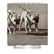Happy Dogs 14 Shower Curtain