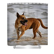 Happy Dogs 5 Shower Curtain