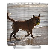 Happy Dogs 7 Shower Curtain
