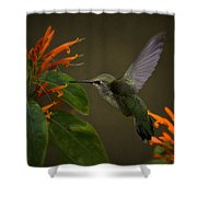 Happy Little Hummingbird  Shower Curtain